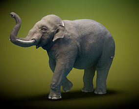 3D asset rigged Asian Elephant