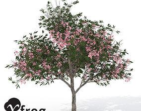 3D model XfrogPlants Oleander
