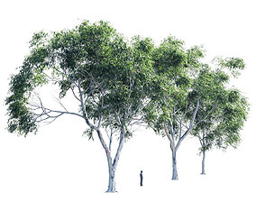 3D model Eucalyptus collection 2