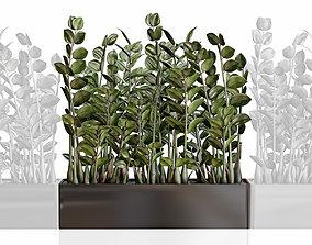 Modular plant Zamioculcas in black vase 3D