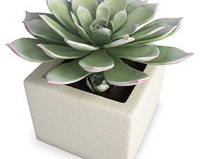 3D Interior Succulent Plant Aeonium pot