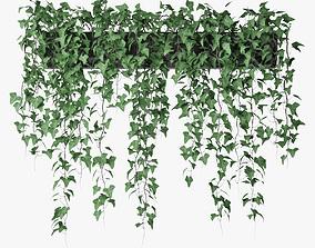 3D model ivy in pot 10 nature