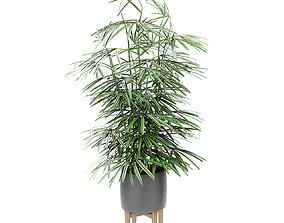 3D model Plant in Pot Flowerpot Exotic Plant pot-plant