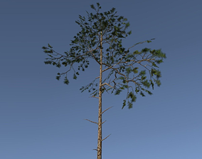 3D model Scots Pine Trees Package