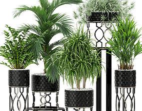 3D model Plants collection 367
