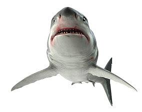 3D model rigged animals Shark