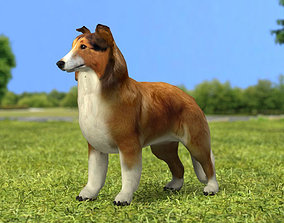 3D Rough Collie