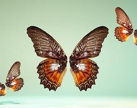 3D model Butterfly 3
