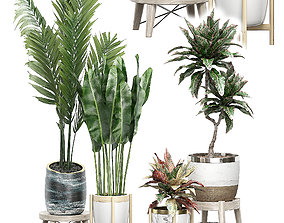 3D model Potted plants Set 42