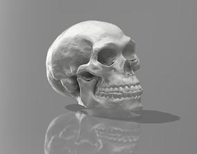 Scan 3D of Skull