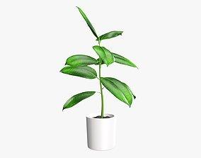 Potted plant decorative 03 3D model