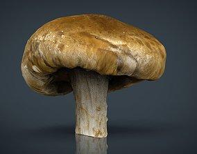 3D asset realtime Mushroom 1
