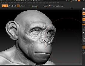 male monkey 3D model animal