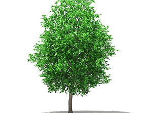 Grapefruit Tree 3D model other