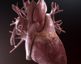 vein Human Heart High Quality 3D model
