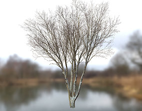 3D asset Autumn Dry Tree Scan Full-Size
