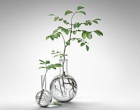 3D Water Plants in Flasks