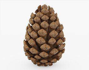 Pine Cone 3D model low-poly