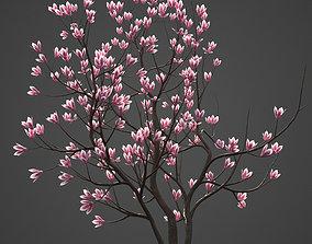 2021 PBR Saucer Magnolia Collection - Magnolia 3D