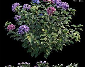 Hydrangea Plant set 33 3D