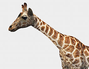 Giraffe 3D Model animated