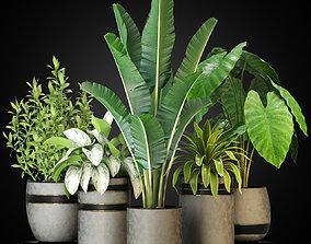 Plants collection 270 3D