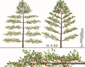 3D Set of Apple or Malus domestica Trees and White Picket