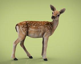 3D model BABY DEER