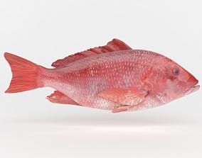Red Snapper Fish 3D model