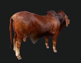 3D model Bull india