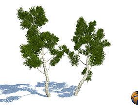 Realistic Tree Elm 3d Model VR / AR ready