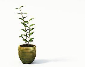 Decorative Plants In A Pot 3D model