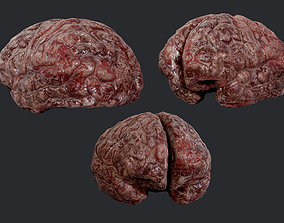 Human Brain Organ Game Ready 04 3D model