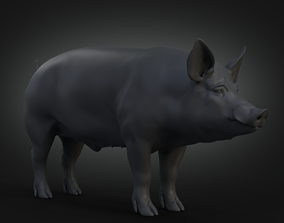 DomesticPig Male 3D model