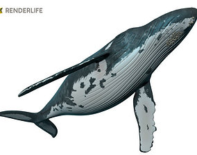 3D model Humpback Whale with animation