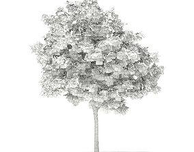 Pedunculate Oak Quercus Robur 6m 3D model