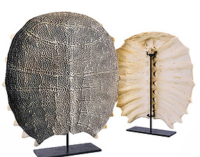 3D model Freshwater Turtle Shell