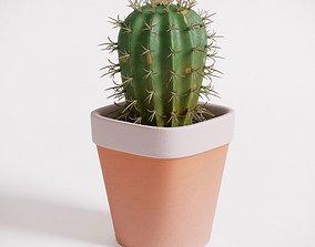 Cactus 3D model cactus
