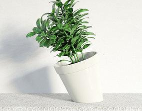 3D plant 09 am141