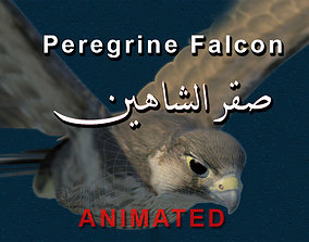Peregrine Falcon Folded Wings 3D asset