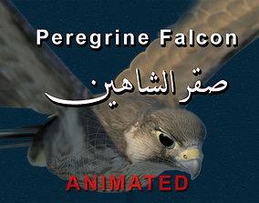 3D model Peregrine Falcon Folded Wings