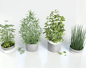 3D Herbs for kitchen