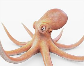 Octopus Rigged 3D asset low-poly