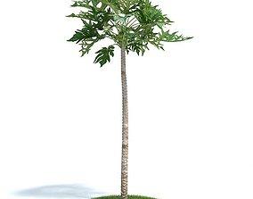 Tall Papaya Plant 3D model