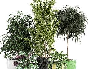 3D Plants collection 111