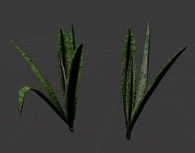 Grass Plant Sansevieria 2in1 3D model