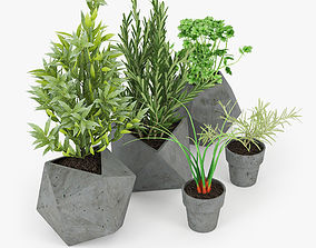 3D basil Concrete Kitchen Plants