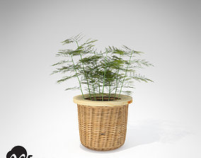 XfrogPlants Asparagus Fern 3D