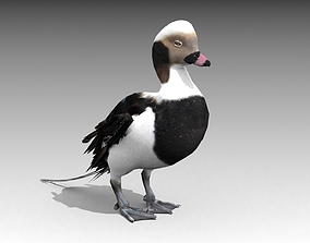 Long-tailed Duck 3D asset animated