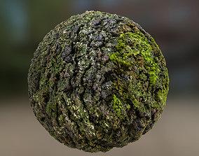 3D Oak bark with moss PBR texture 2k